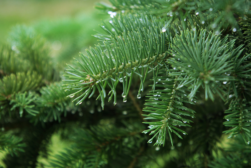 What Is Evergreen Content And Why It Must Evolve