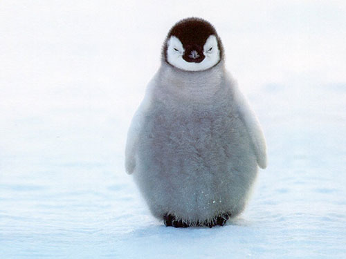 unhappy penguin