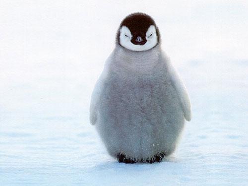 unhappy penguin